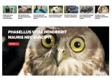 Onedio, Listelist, BuzzFeed tarzı en iyi 13 WordPress viral haber teması